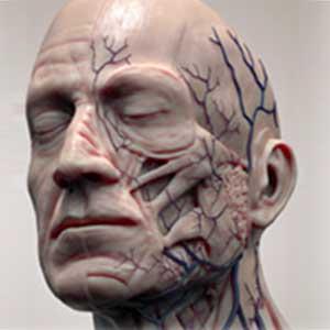 terapia-manual-complejo-cervico-craneo-mandibular/